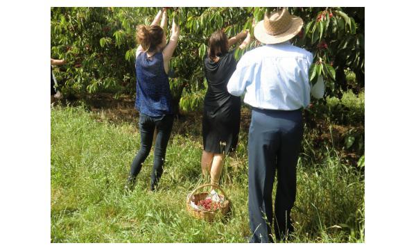 Cueillette de cerises Toulouse